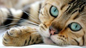 frases-de-gatos